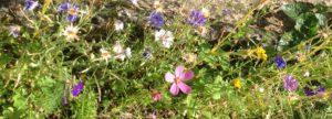 verschiedene Blumen in einer Wiese